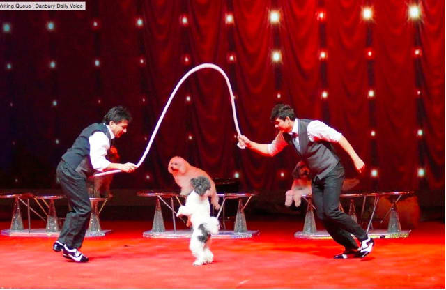 """Come see the Olate Dogs, winners of the $1 million prize on """"America's Got Talent,"""" perform at The Ridgefield Playhouse on Thursday, May 5, at 7 p.m."""