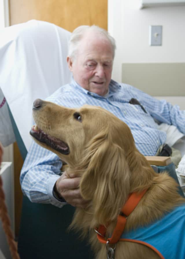 Through animal-assisted therapy, Pace University and The Good Dog Foundation hope to decrease the number of female incarceration and help promote family building.
